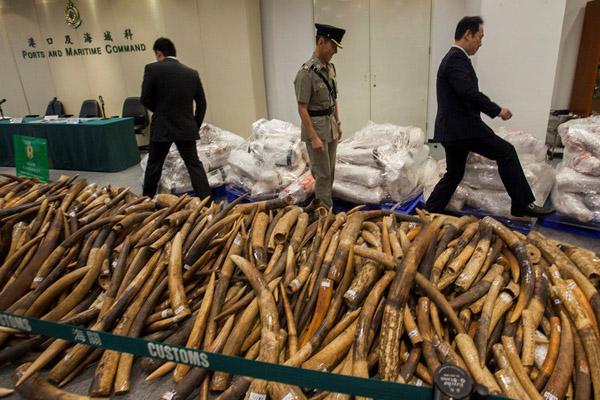 контрабанда слоновой кости
