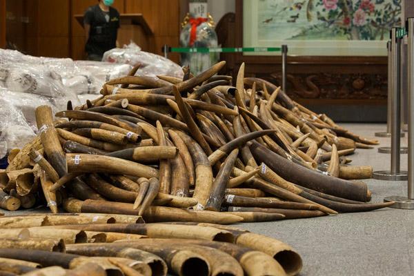 слоновая кость Ivory